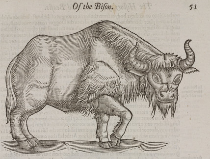 The Bison, 1607.