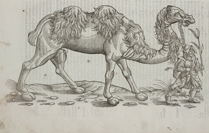 The Camel, 1607.