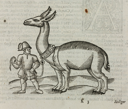 The 'Allocamelus', 1607.