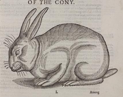 The Cony, 1607.