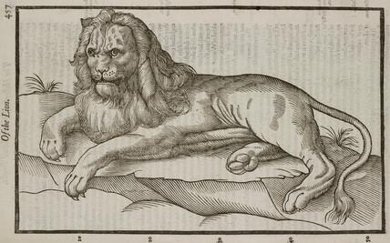 The Lion, 1607.