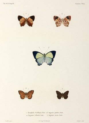 Five butterflies, 1822-1825.