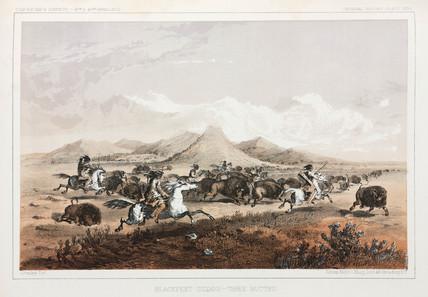 Blackfeet Indians hunting buffalo, North America, 1853-1855.