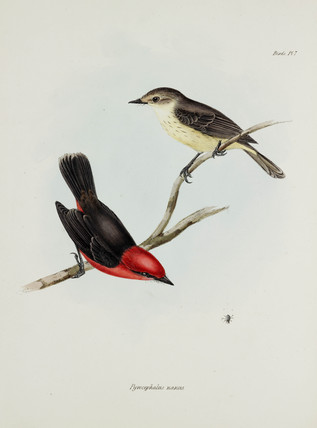 Pair of birds, c 1832-1836.