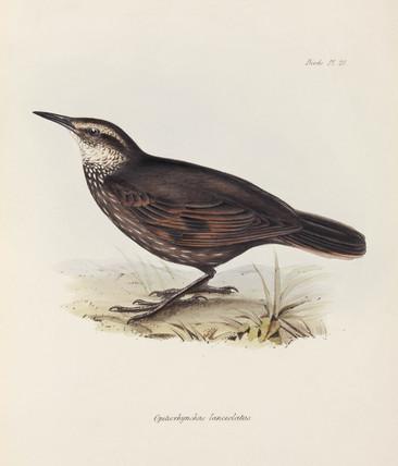 Bird, c 1832-1836.