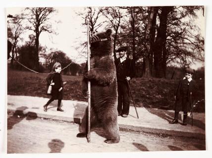 Dancing bear, c 1905.