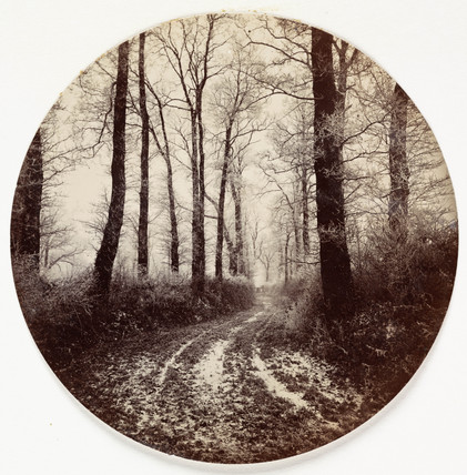 Path through trees, c 1890s