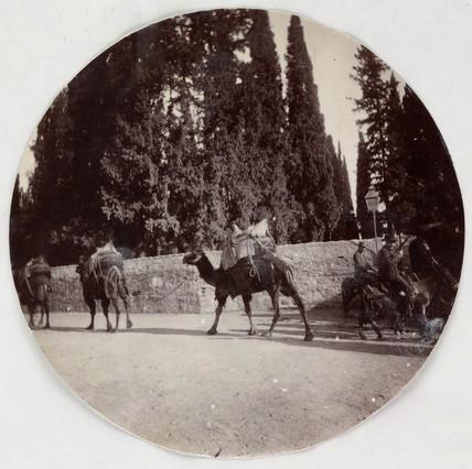 Camels, c 1890.