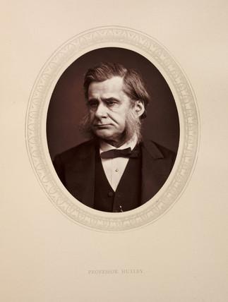 'Profesor Huxley', 1880.