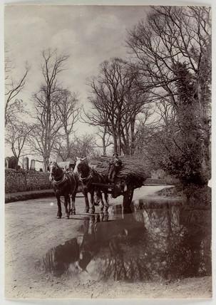 Horses pulling a cart, c 1890.