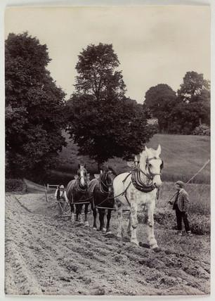 Ploughing, c 1890.