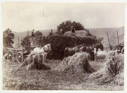 Harvest, c 1890