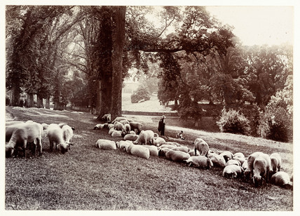 'The Monk's Walk At Chenies', 1889