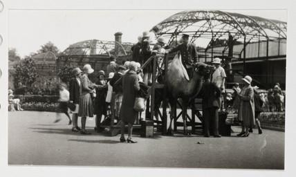 Camel ride, c 1930.