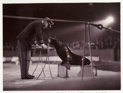 Performing seal, c 1936.