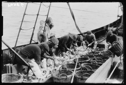 Gutting fish, c 1930.
