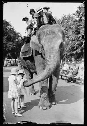 An elephant ride at the zoo, 6 June 1933.