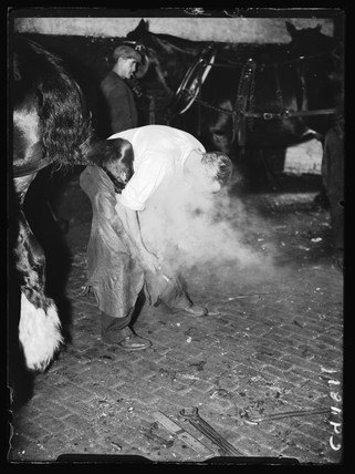 Man shoeing a horse, London, 1934.