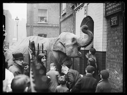 Rosie the circus elephant, c 1938.