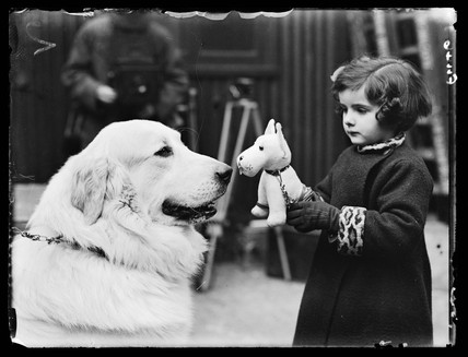 Little girl at Crufts, 1937.