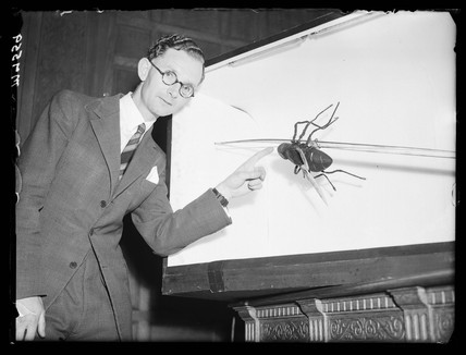 Model of a housefly, 1944.
