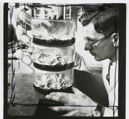 Flasks growing penicillin culture, 1943.