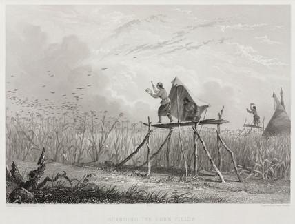 'Guarding the Corn Fields', North America, 1853.