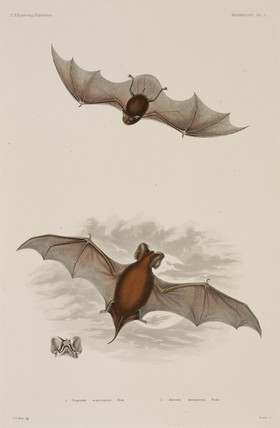 Two types of bat, 1838-1842.