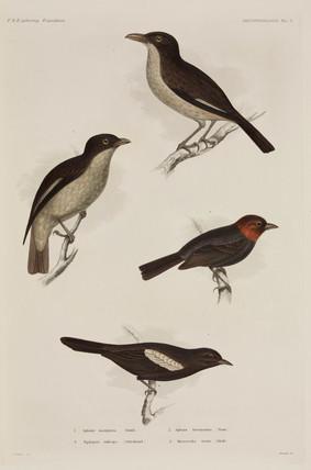 Four birds, 1838-1842.