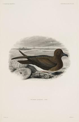 Petrel, 1838-1842.