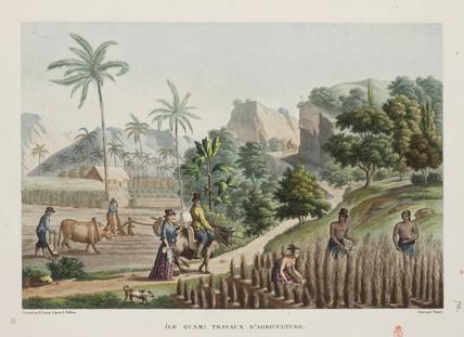 Agricultural scene, Guam, 1817-1820.
