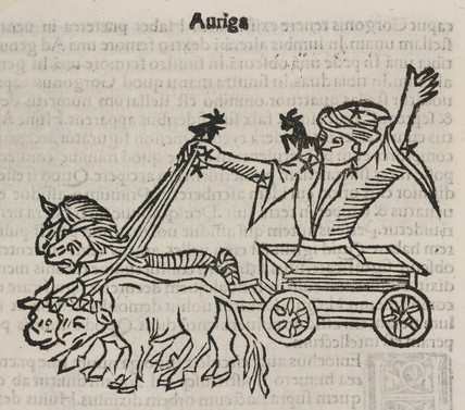 The constellation of Auriga, 1488.