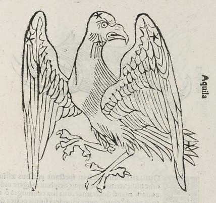 The constellation of Aquila, 1488.