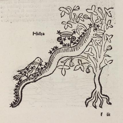 The constellation of Hydra, 1488.