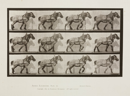 Time-lapse photographs of a cart-horse walking, 1872-1885.