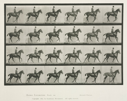Time-lapse photographs a man on a trotting horse, 1872-1885.