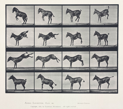 Time-lapse photographs of a mule kicking, 1872-1885.