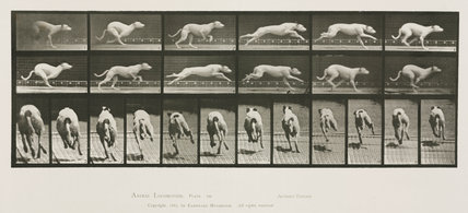 Time-lapse photographs of a greyhound running, 1872-1885.