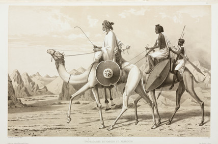 Bisharin and Ababda dromedaries, Egypt, 1830-1831.