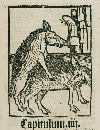 Mating boars, 1497.