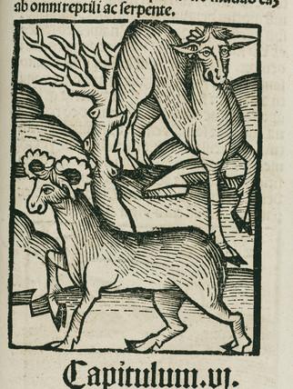 The Elk, 1497.