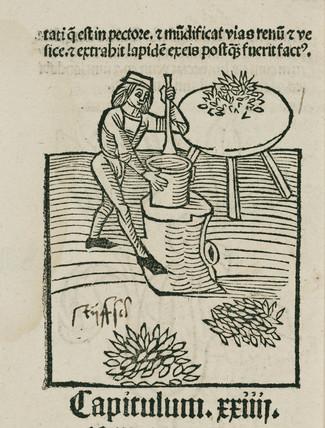 Preparing plants, 1497.