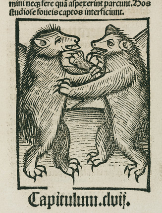Bears fighting, 1497.