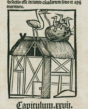 Storks nesting on a roof, 1497.