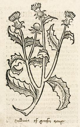 Thistle, 1497.