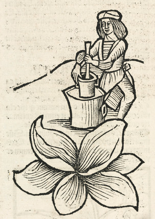 Man using a pestle and mortar to crush plants, 1497.