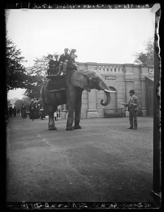 'Major Adams Giving An Elephant A Bun At Zoological Gardens', 1898.