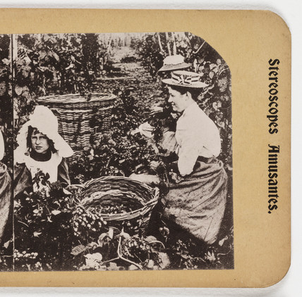 In a Kent Hop Garden', about 1900.