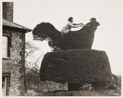 Woman trimming a topiary chicken, 9 March 1933.