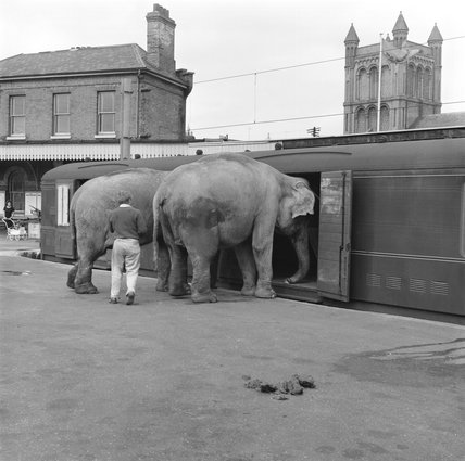 Circus elephants boarding a train, 1961